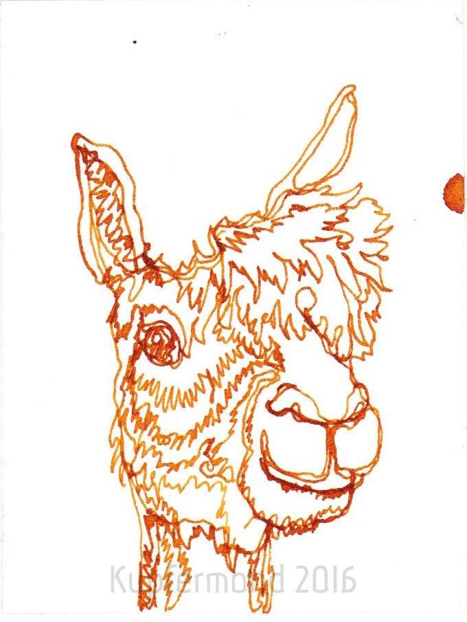 alpaca11