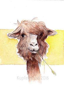 alpaca14