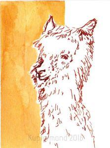 alpaca17