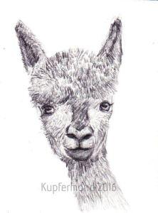 alpaca18